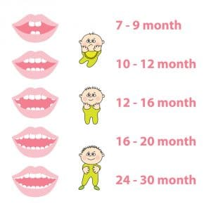 Tooth eruption chart Renton Kids Dentistry
